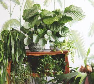 Miracle Plants That Help You Sleep Better